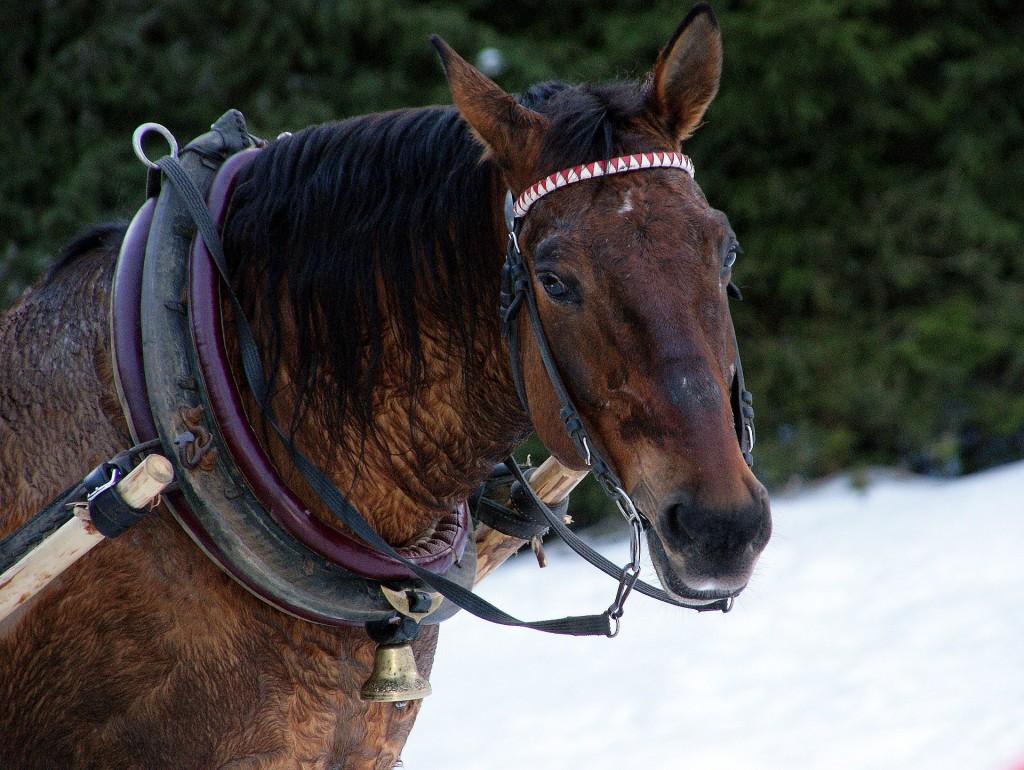 Paard met haam. Foto Anna Zapotocka