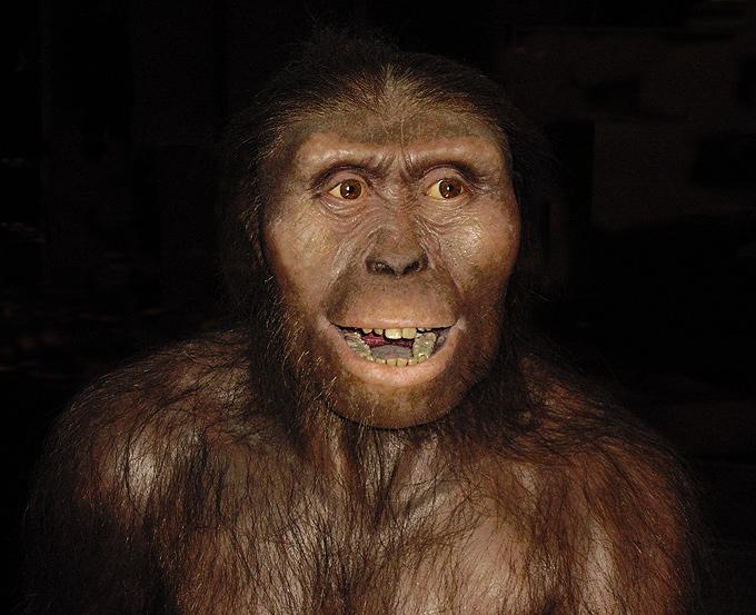 australopithecus_afarensis2
