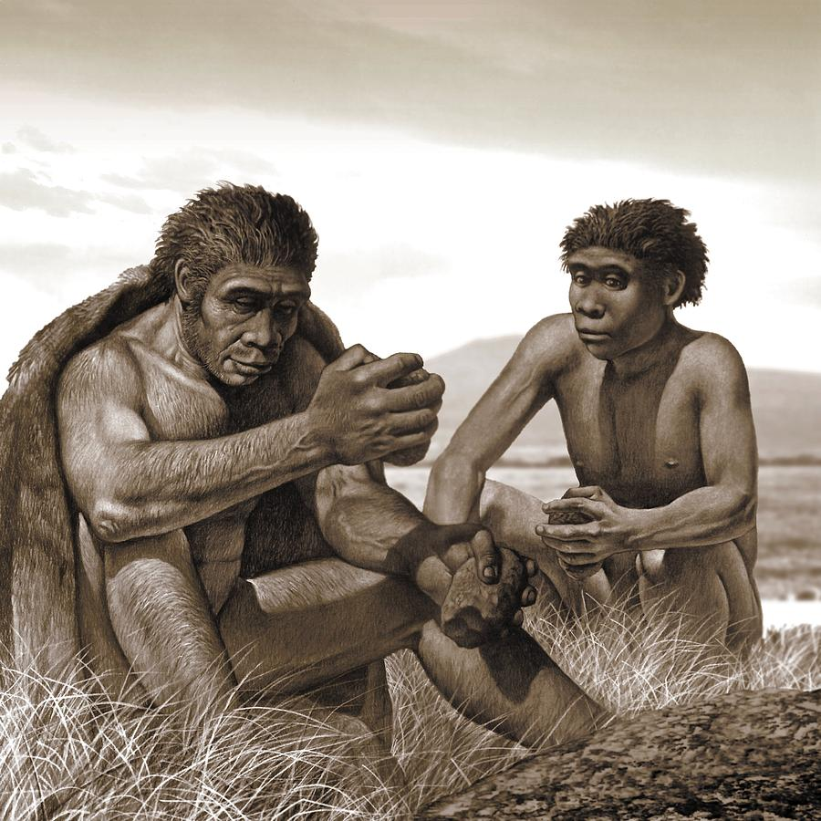 homo-ergaster-artwork-science-photo-library