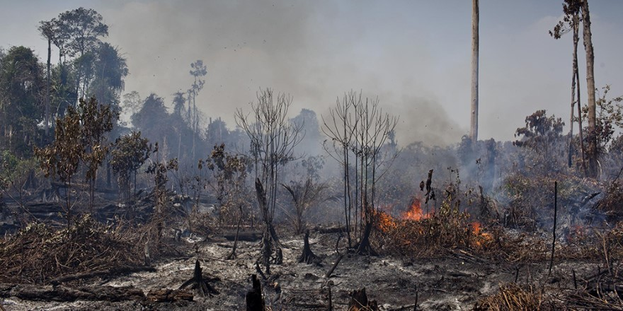 Open flames on dry tree branches in an area of recently deforested peatland in the PT Rokan Adiraya Plantation oil palm concession.