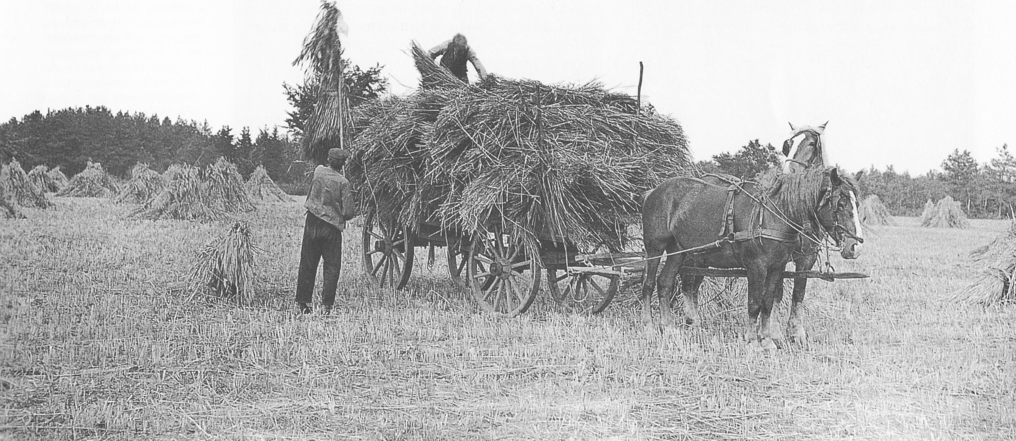 paard en wagen vol hooi