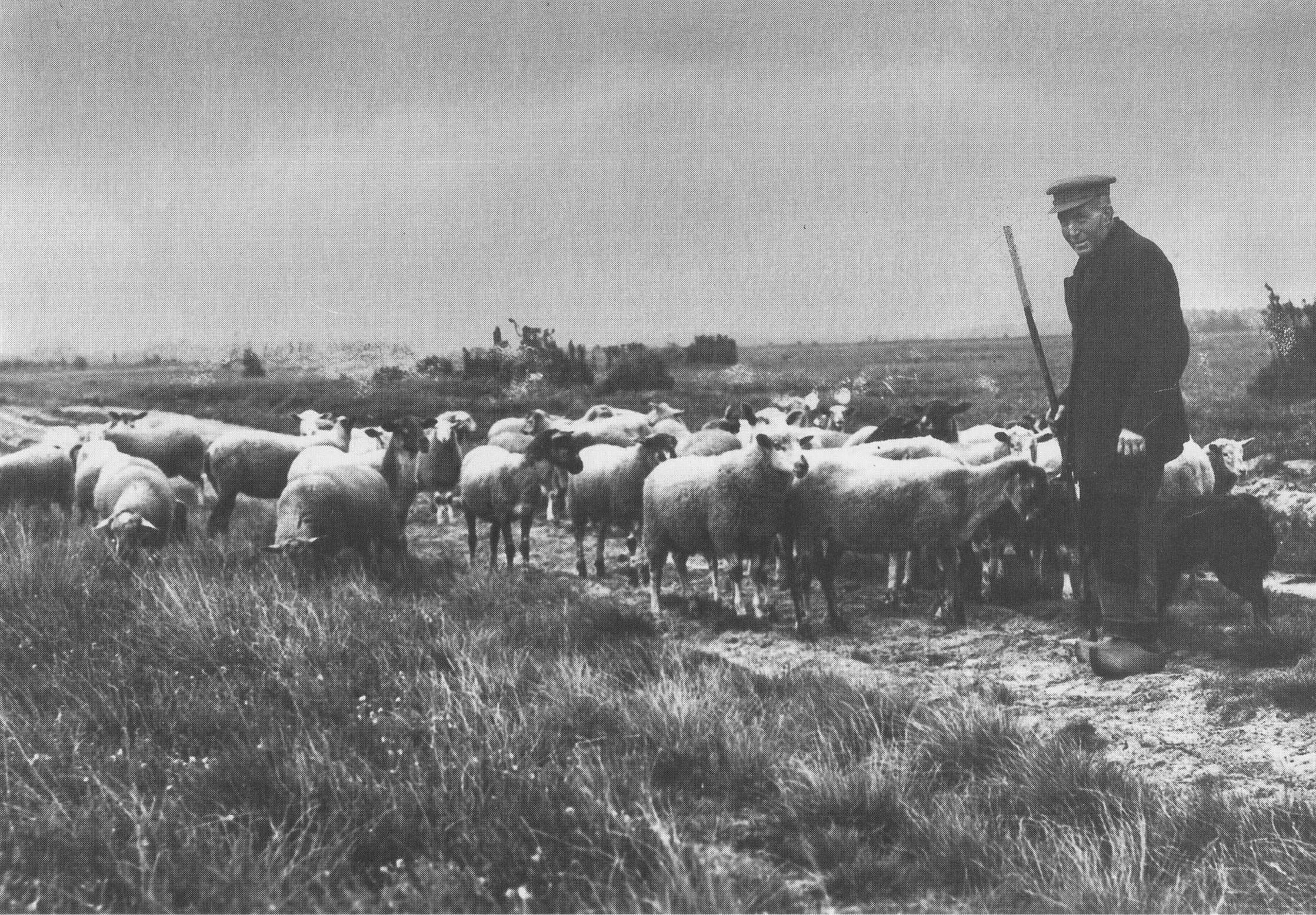 schaapskudde Twente 1930